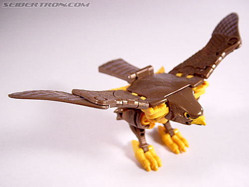 Transformers Beast Wars Airazor (Image #17 of 99)