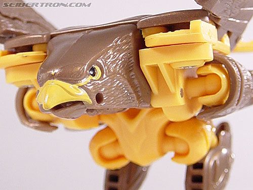 Transformers Beast Wars Airazor (Image #27 of 99)