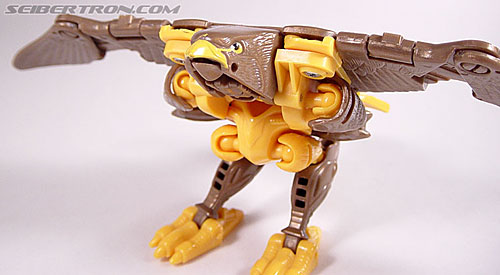 Transformers Beast Wars Airazor (Image #30 of 99)