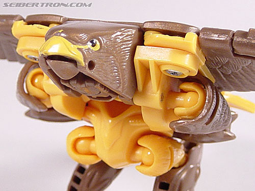 Transformers Beast Wars Airazor (Image #31 of 99)