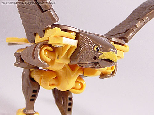 Transformers Beast Wars Airazor (Image #36 of 99)