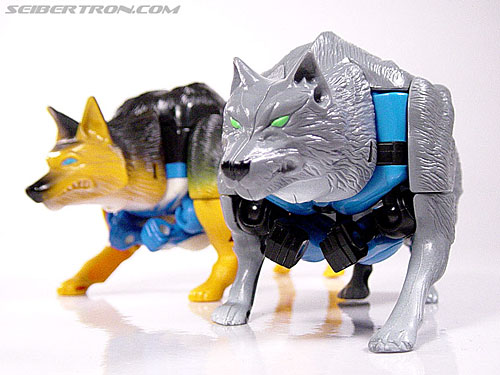 Transformers Beast Wars Wolfang (Howlinger) (Image #4 of 74)