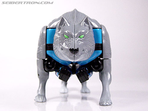 Transformers Beast Wars Wolfang (Howlinger) (Image #6 of 74)