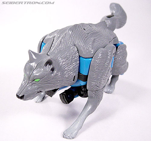 Transformers Beast Wars Wolfang (Howlinger) (Image #19 of 74)