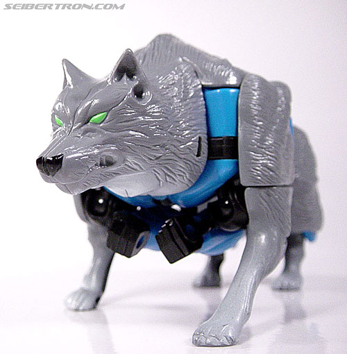 Transformers Beast Wars Wolfang (Howlinger) (Image #20 of 74)