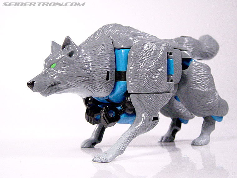 Transformers Beast Wars Wolfang (Howlinger) (Image #16 of 74)