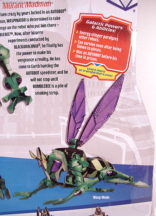 Transformers Animated Waspinator (Wasp) (Image #13 of 110)