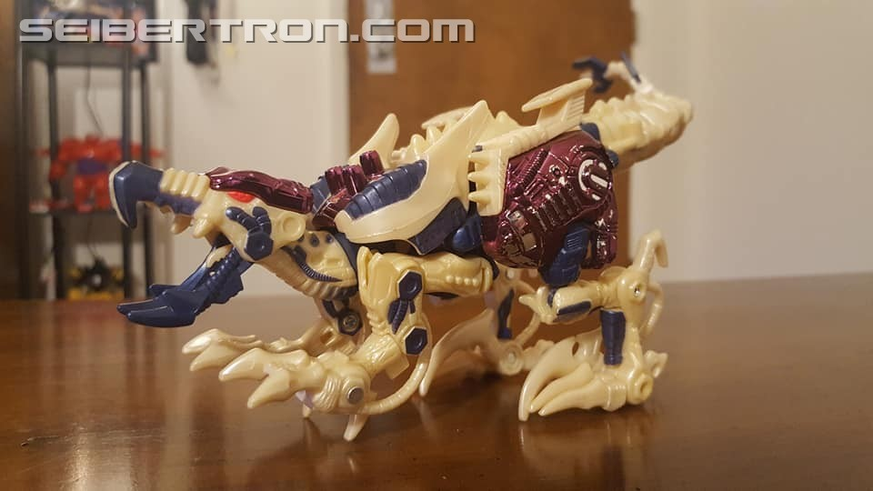 Transformers News: Seibertron.com Transformers Photo Challenge #19: Shape Shifting Shenanigans